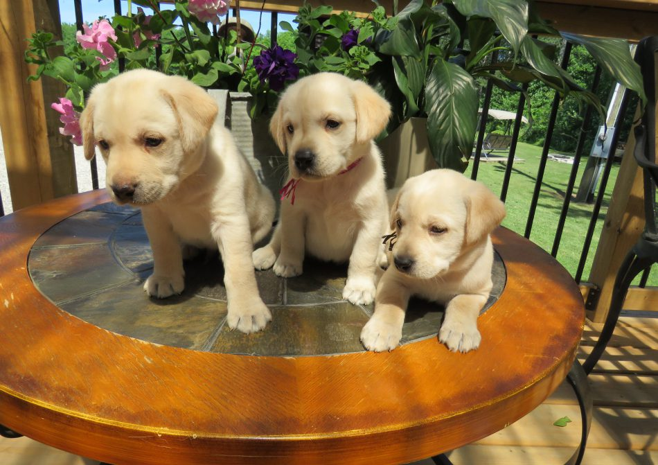 home-ready-for-puppy-image